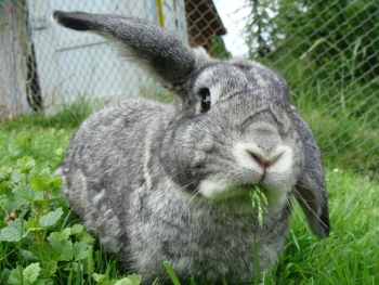 kaninchen info anschaffung sind kaninchen das richtige haustier. Black Bedroom Furniture Sets. Home Design Ideas