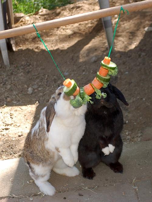 Kaninchen info gehege beschäftigung
